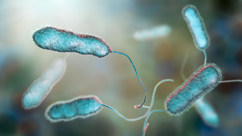 PE1021_Legionella-bacteria.jpg